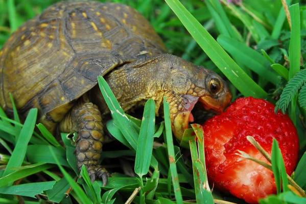 HAWMC 2013 - Day 3: Wordless Wednesday - Happy Turtle Eating Healthy Food